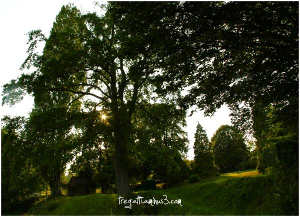 trees, sun