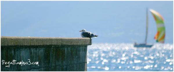 gull, sailboat, lake
