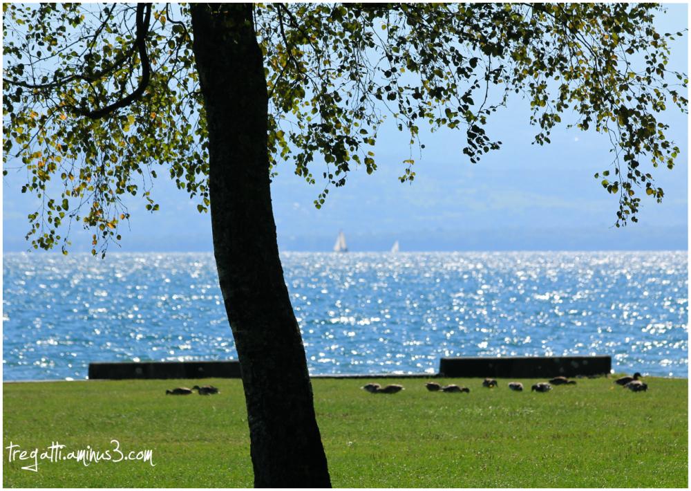 ducks, lake, boats, tree