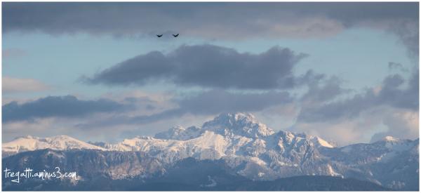 cormorants, snow, mountain