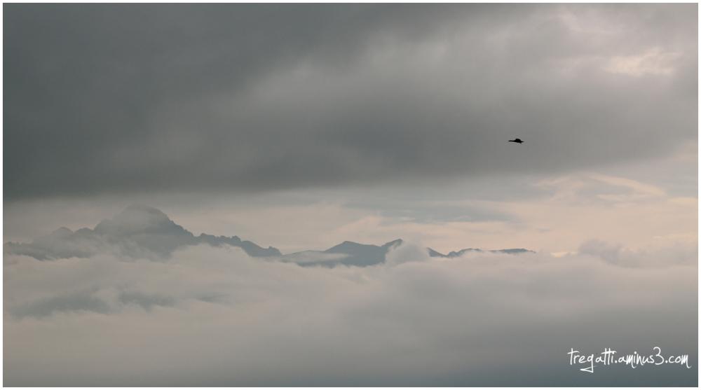 cormorant, mountain, sky