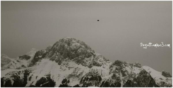 mountain, snow, bird