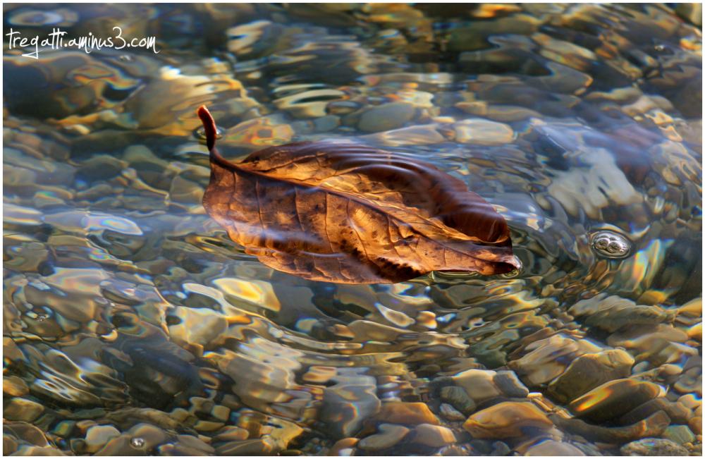 autumn, leaf, lake