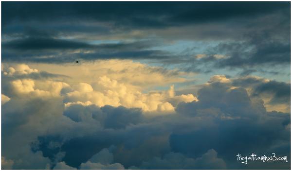 gull, clouds, sky
