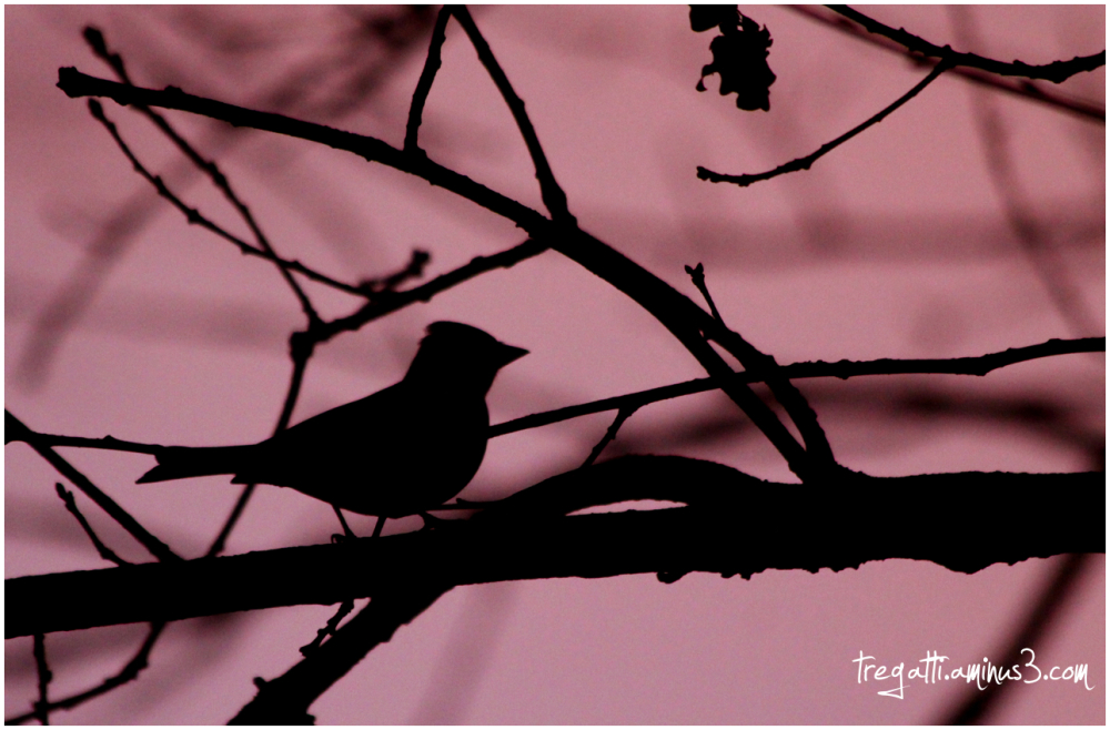 bird, silhouette