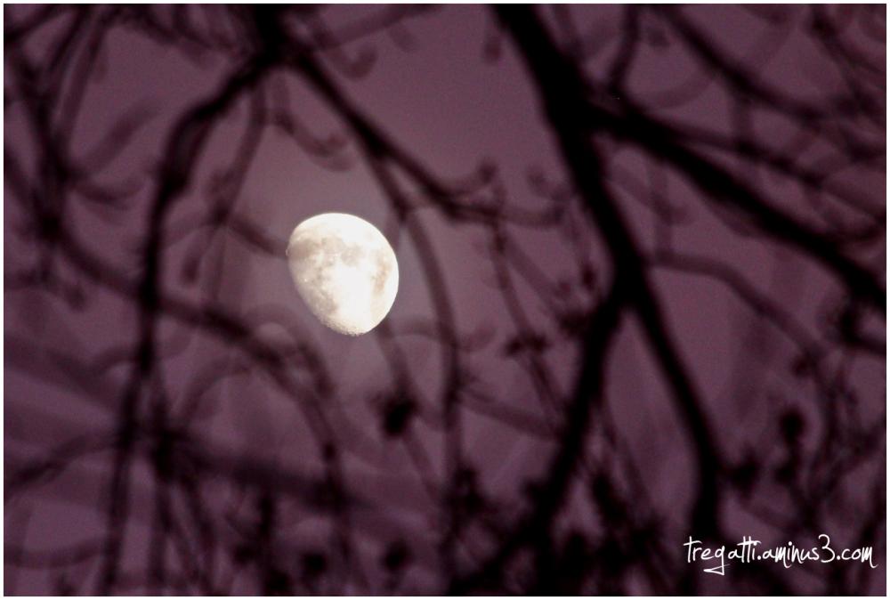 moon, trees, silhouette