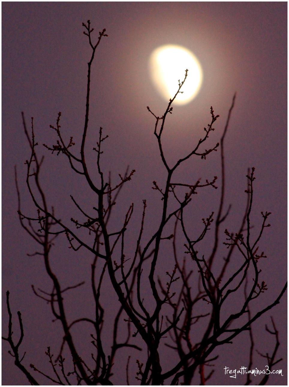 moon, tree, silhouette