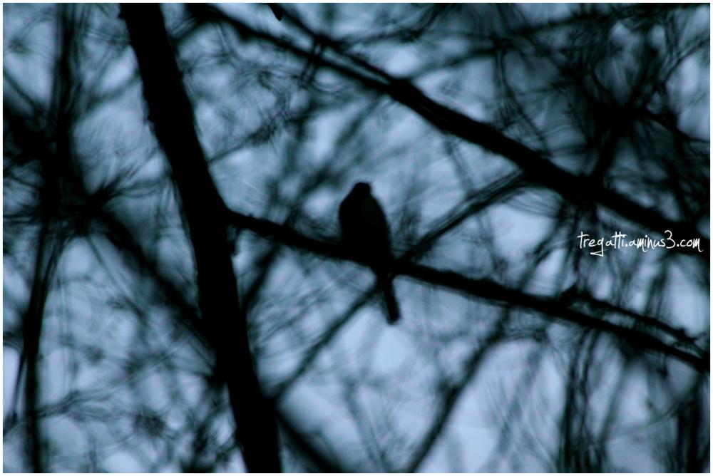 bird, trees