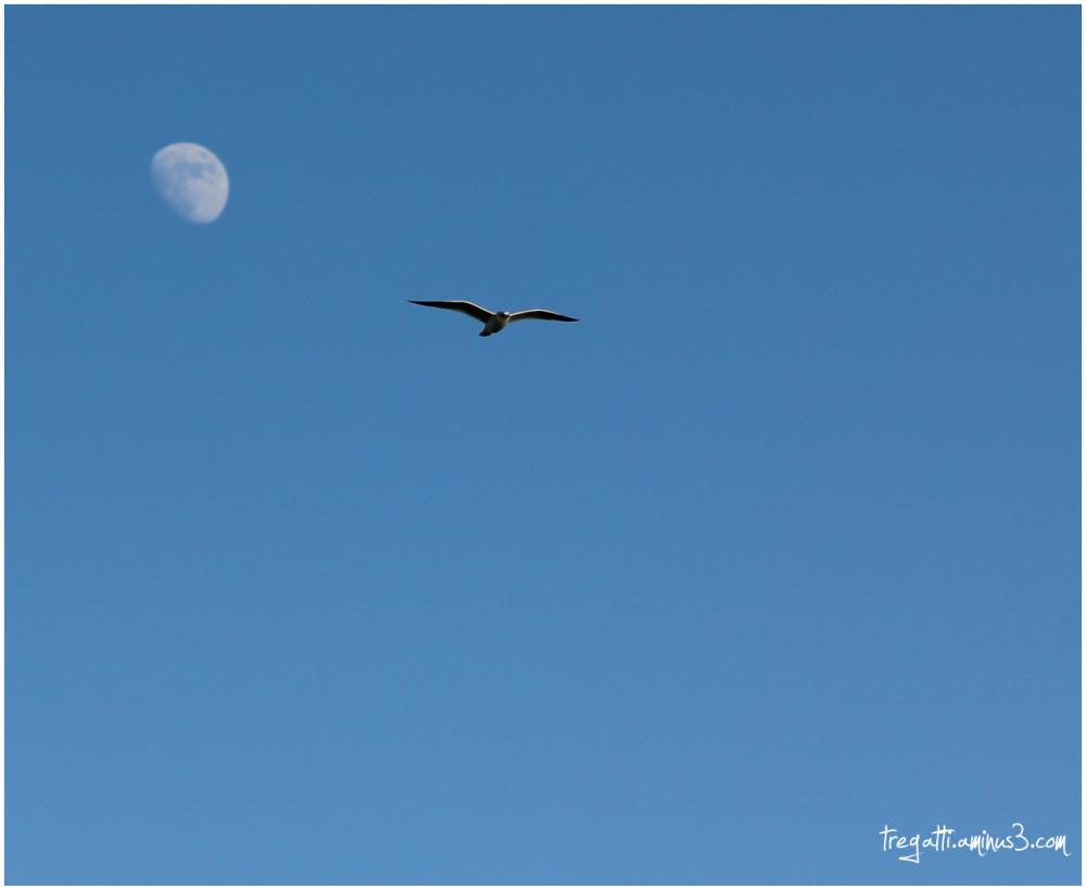 moon, gull