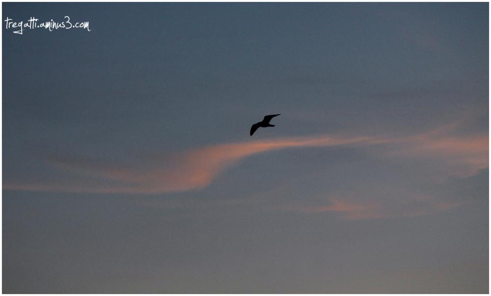 gull, clouds