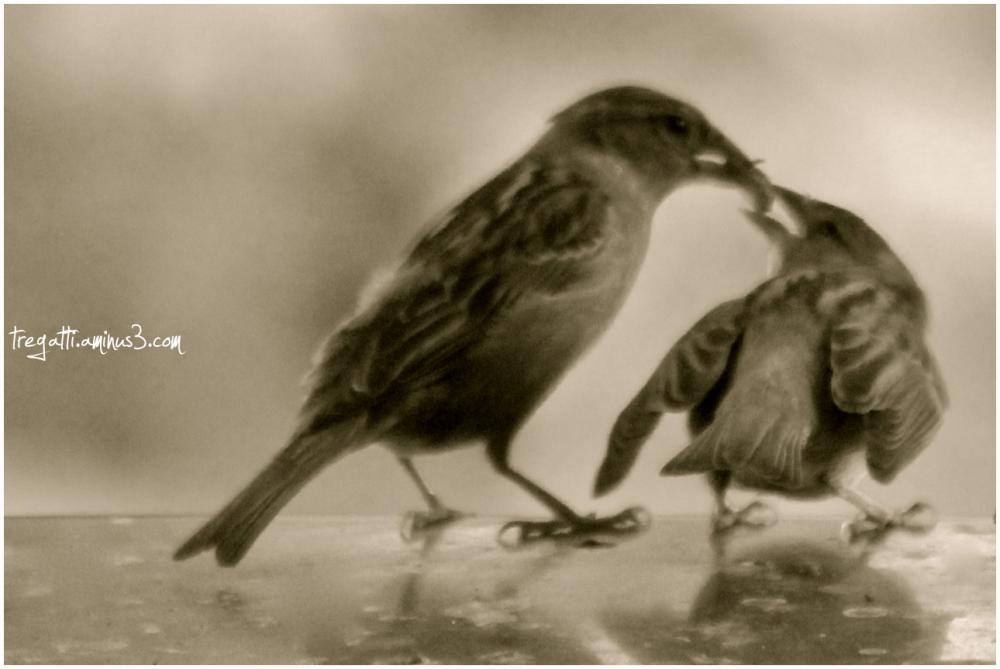 birds, raisin