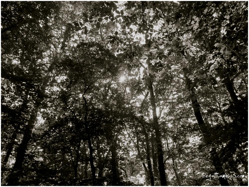 forest, sunlight, summer