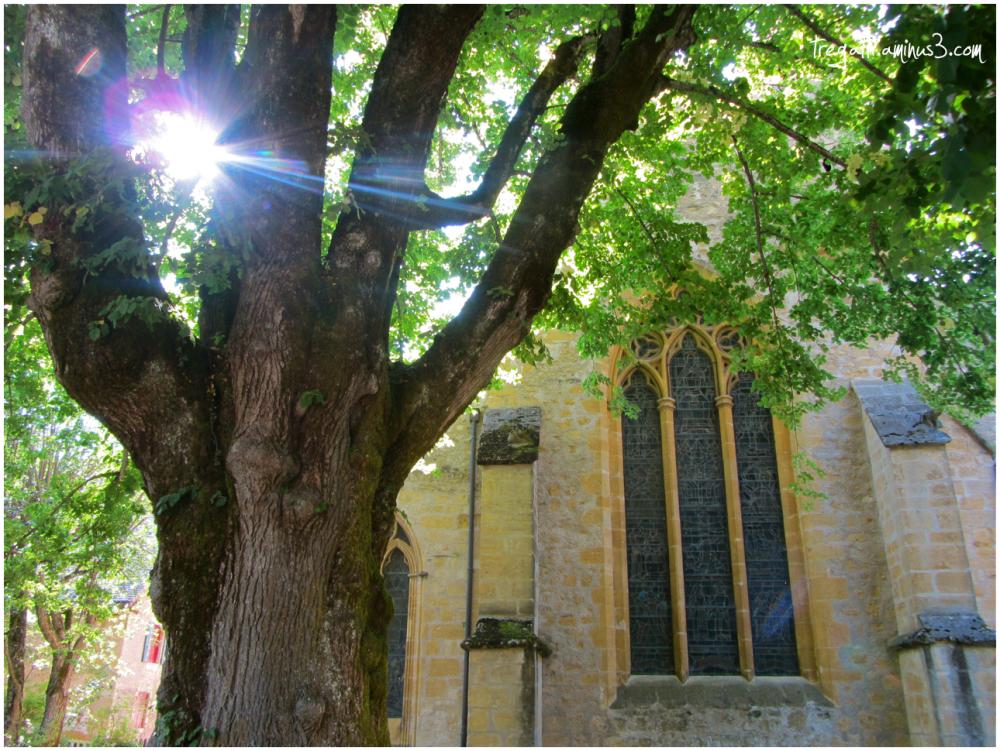 tree, church
