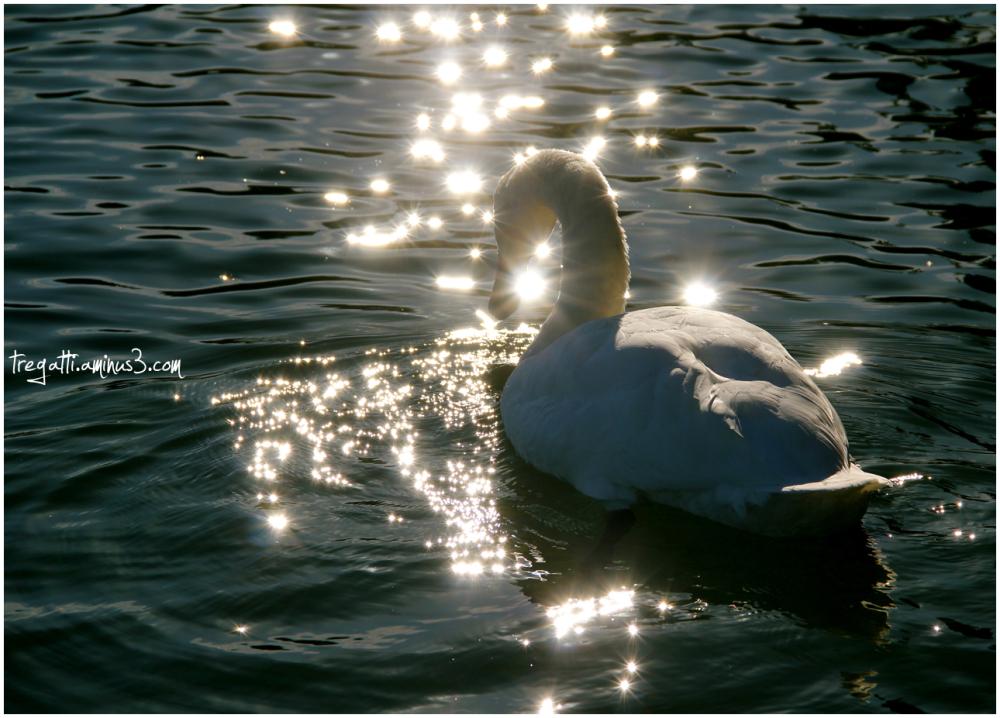 swan, sparkles