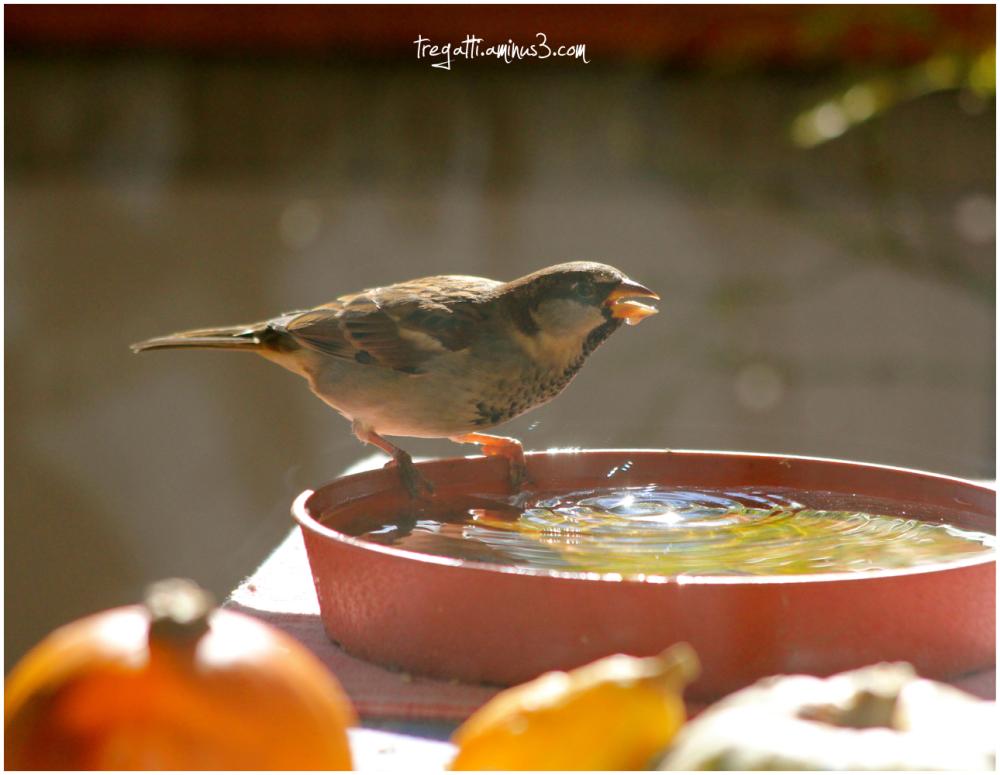 bird, water