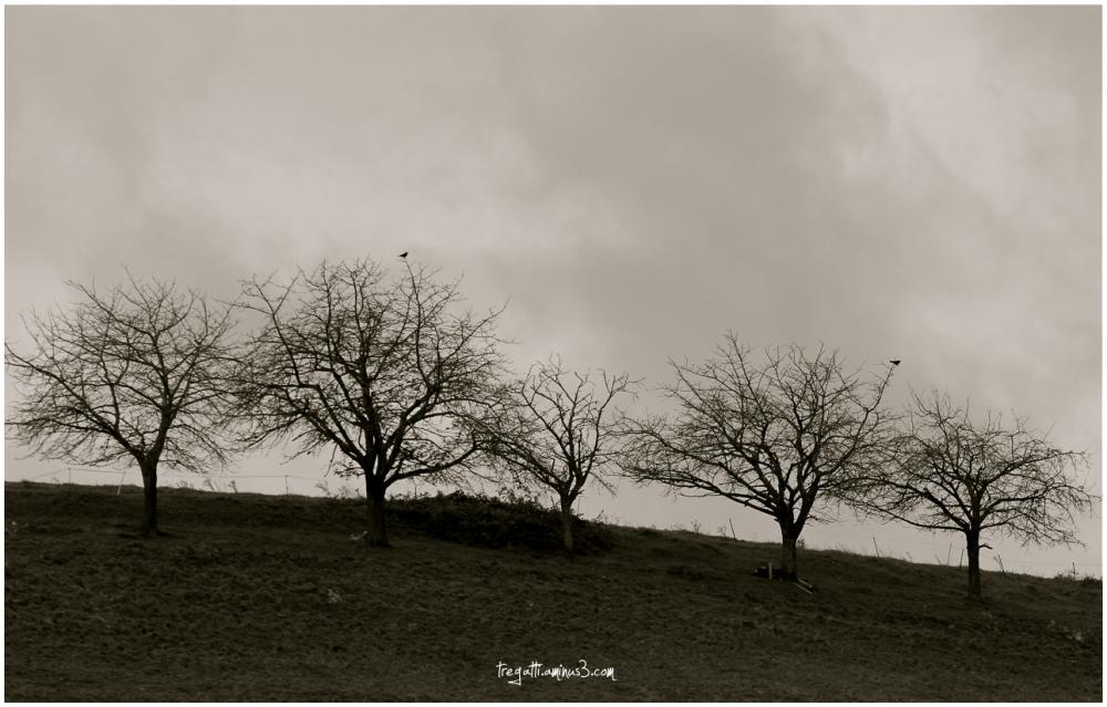 trees, birds