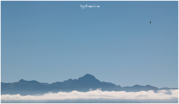 moutains, cloud, bird