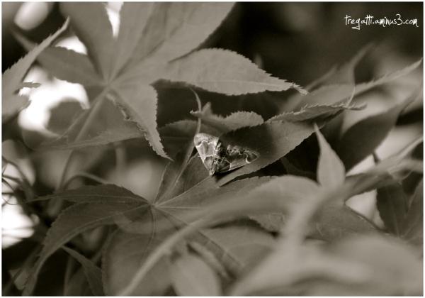 moth, japanese maple tree
