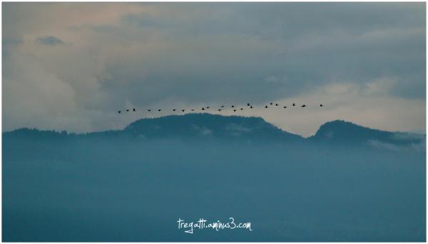 mist, mountain, migrators