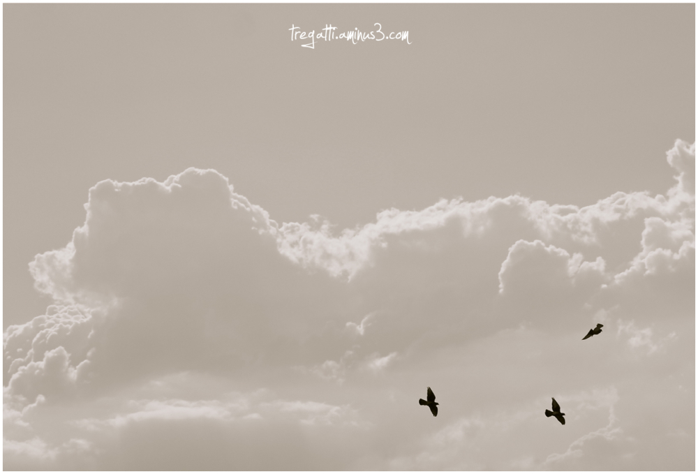 gulls, clouds, sky