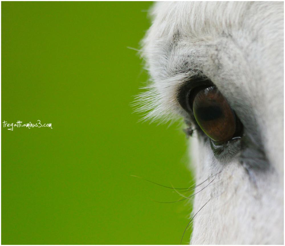 donkey, eye