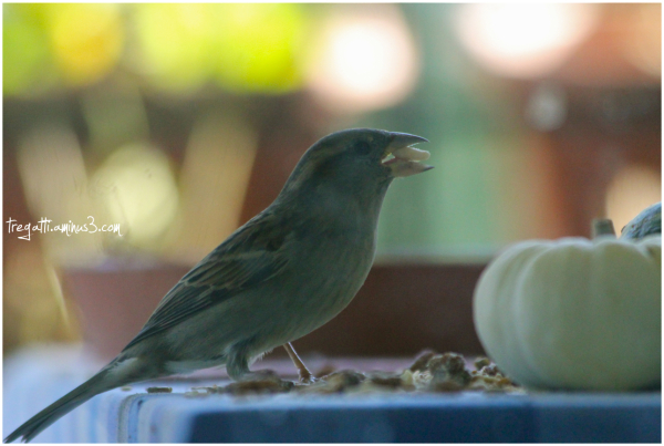 bird, pumpkin, nut