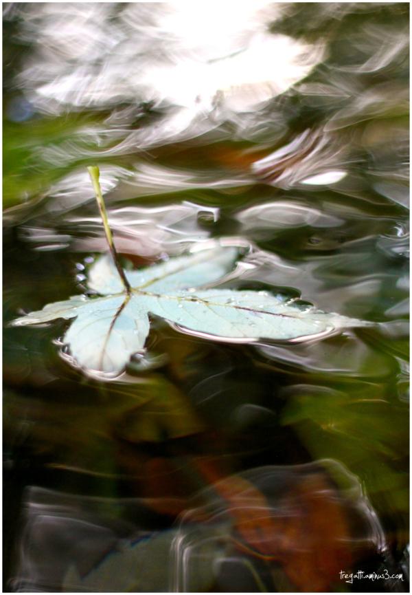 autumn, leaf, water