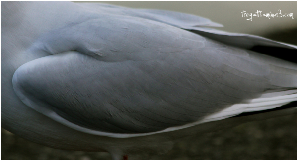gull, wing