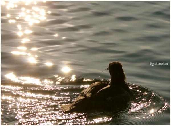 duck, sunlight