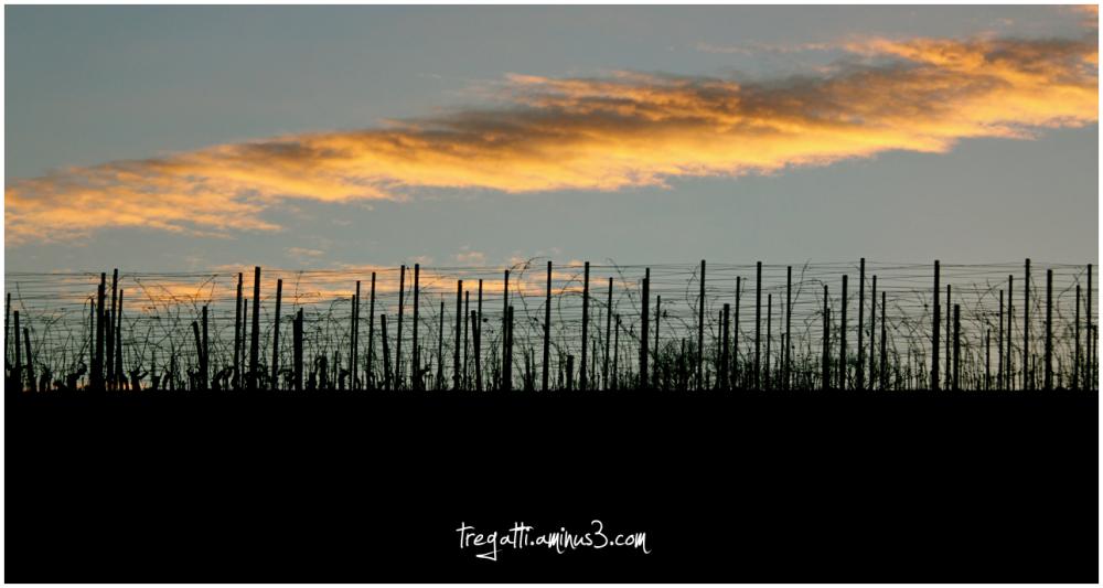 winter, vineyard, cloud
