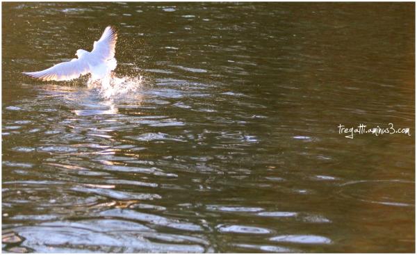gull, water, sunlight