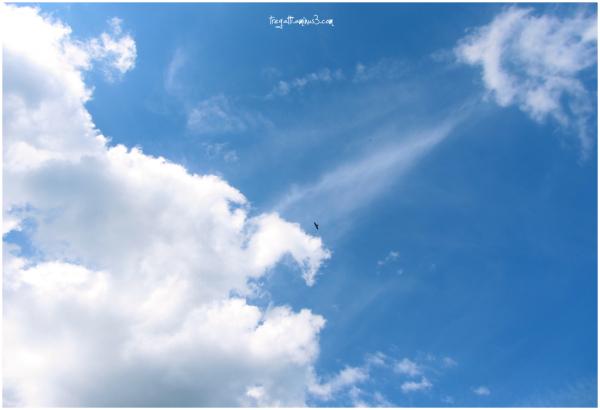 falcon, sky, clouds