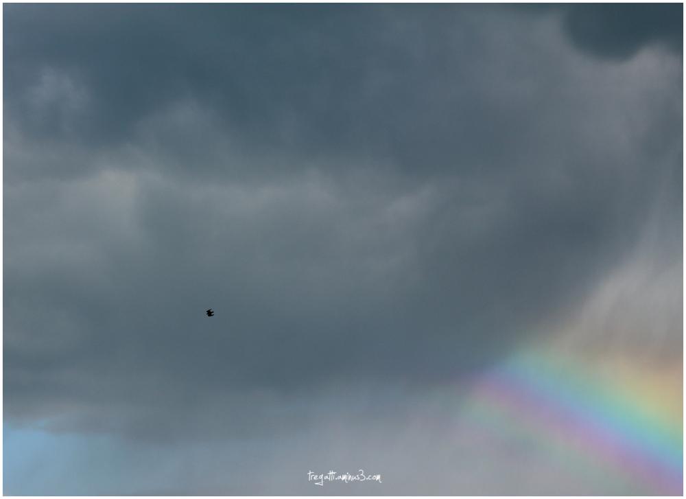 black kite, rainbow