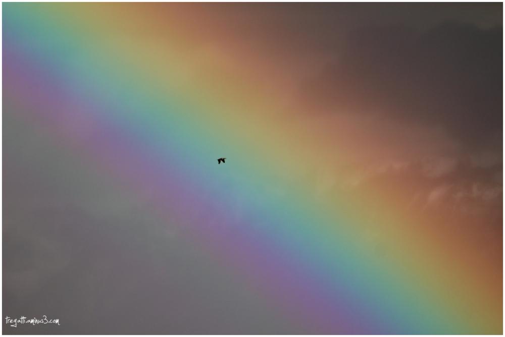 rainbow, duck