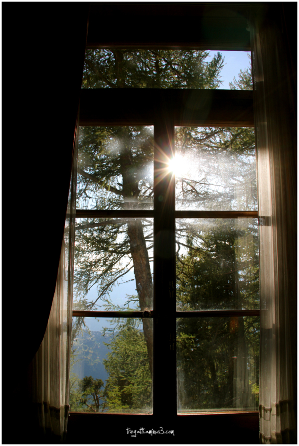 window, sunlight, curtains, trees