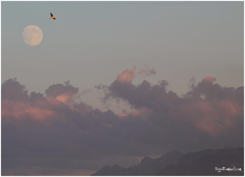 gull, moon