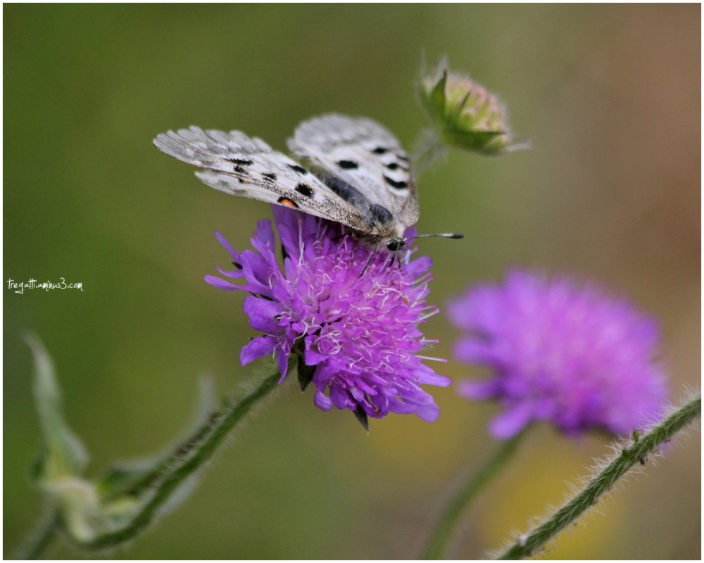 butterfly, wildflower