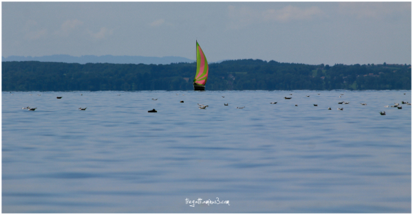 lake, sailboat