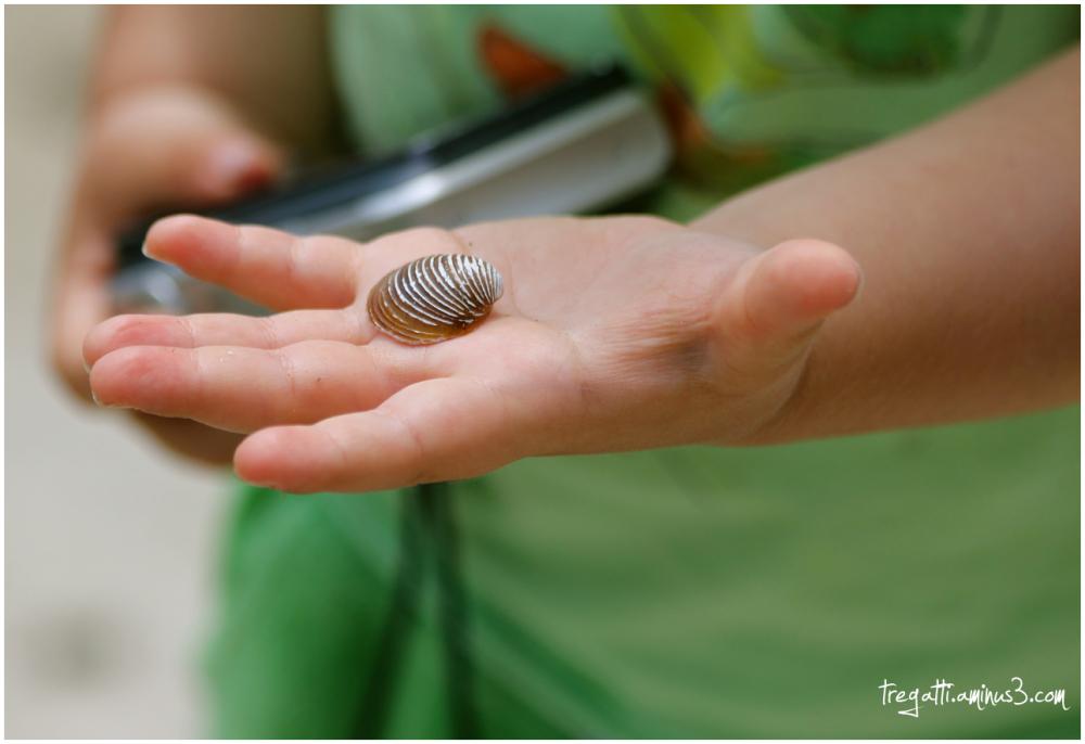 shell, hand