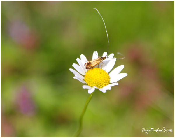wildflower, insect