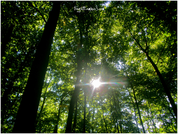 trees, sunlight