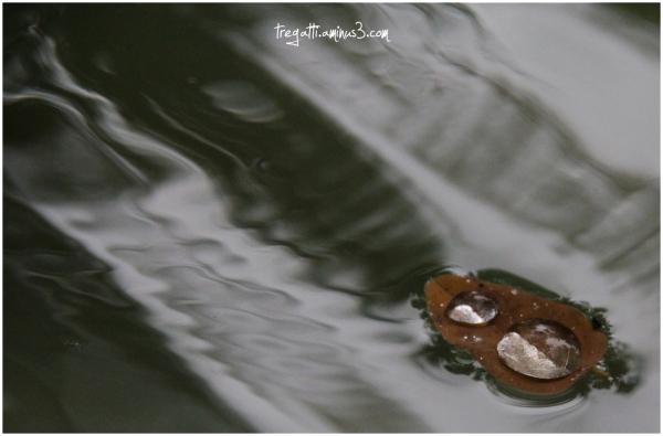 autumn, leaf water