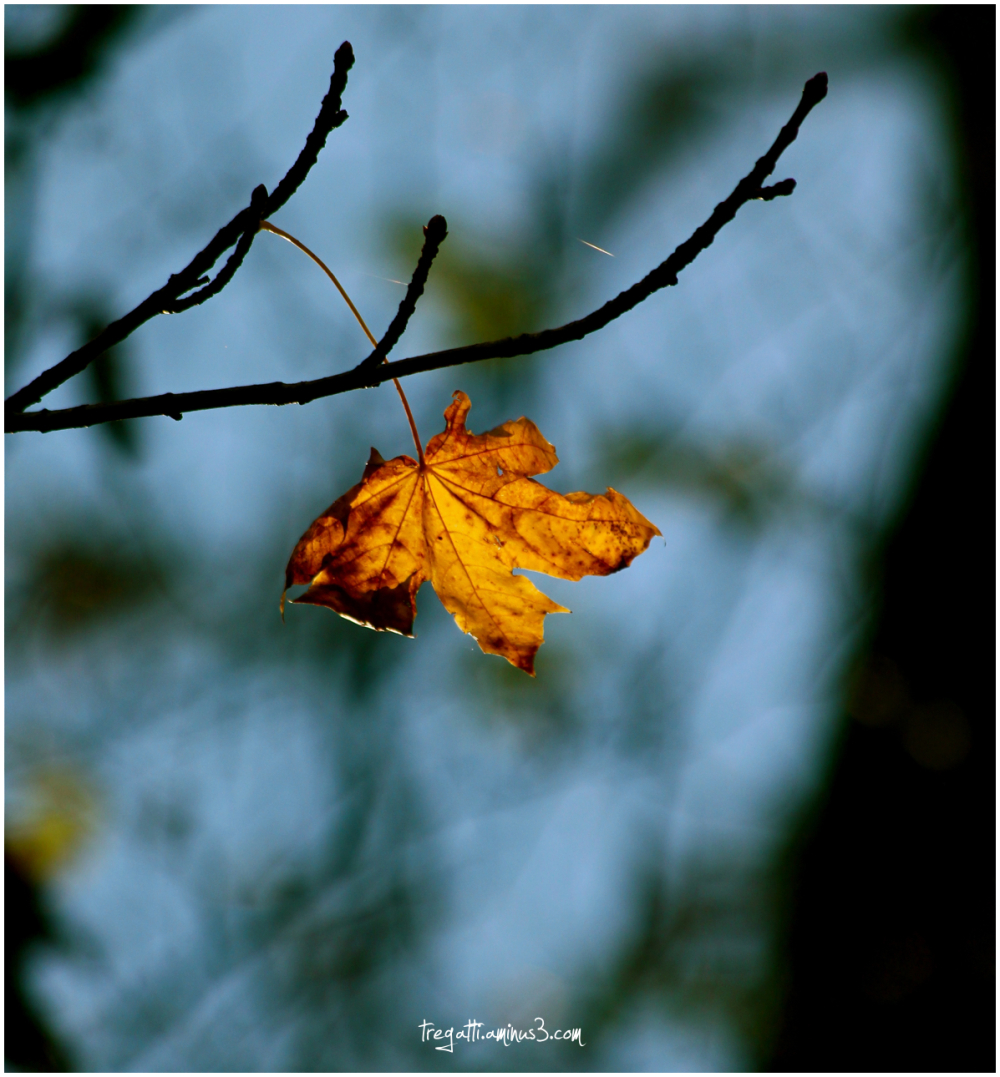 autumn, leaf