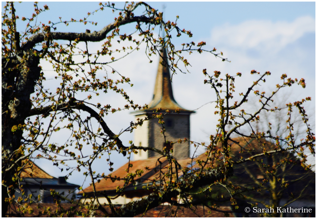 trees, buds, village, church