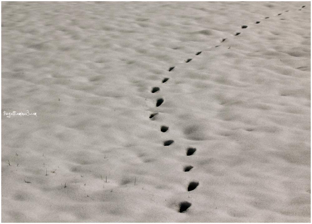 paw prints, snow
