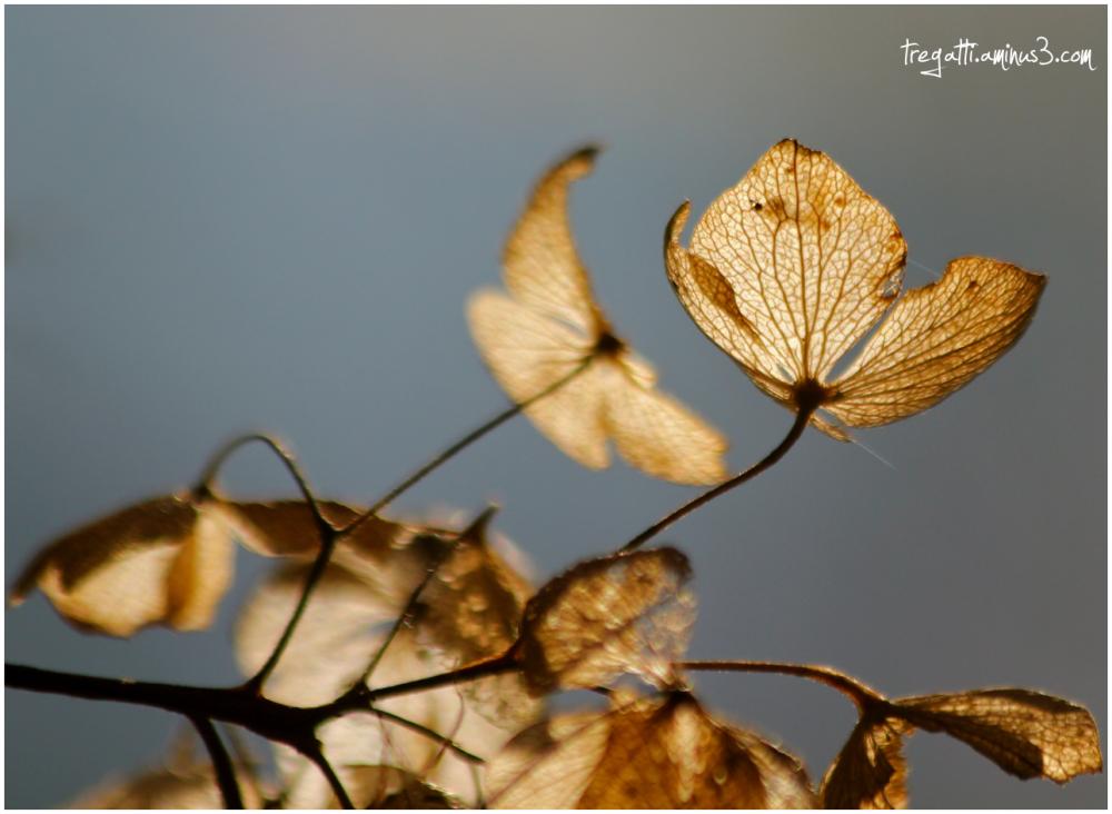 winter, sunlight, petal