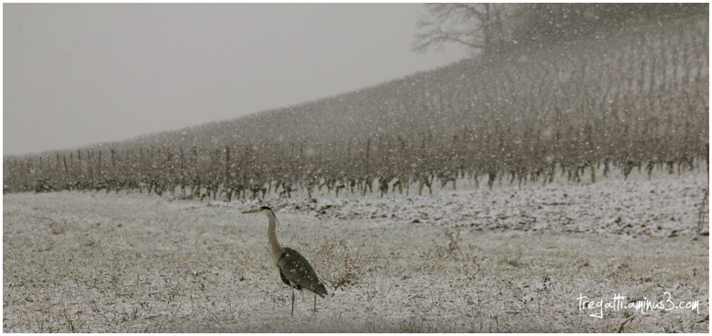 heron, snowfall, snow, winter