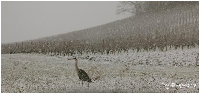 heron, snowfall, snow, winter