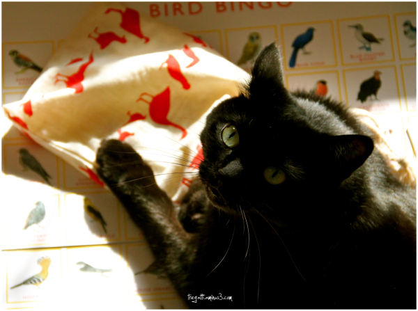 cat, bird, bingo