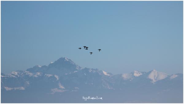 ducks, mountain